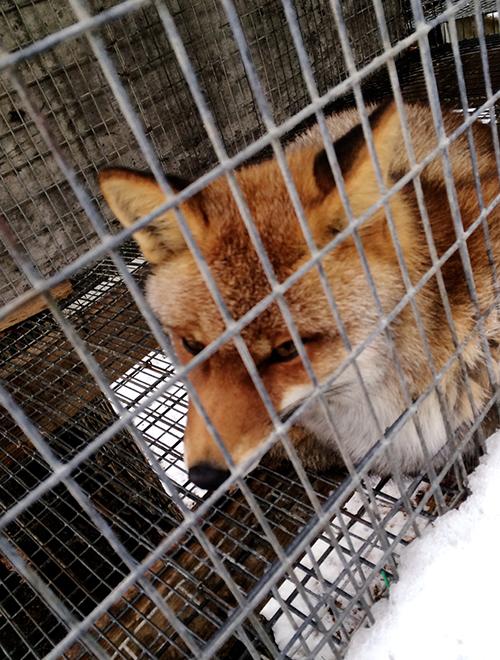 fox_5