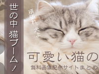 世の中、猫ブーム!可愛い猫の無料画像配布サイトまとめ