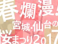 春爛漫!宮城・仙台の桜まつり2017
